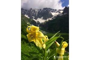 Пропуск на территорию Кавказского Государственного Биосферного Заповедника
