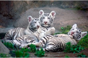 Сочи. Ореховский водопад. Зоопарк Сочи с белыми тиграми
